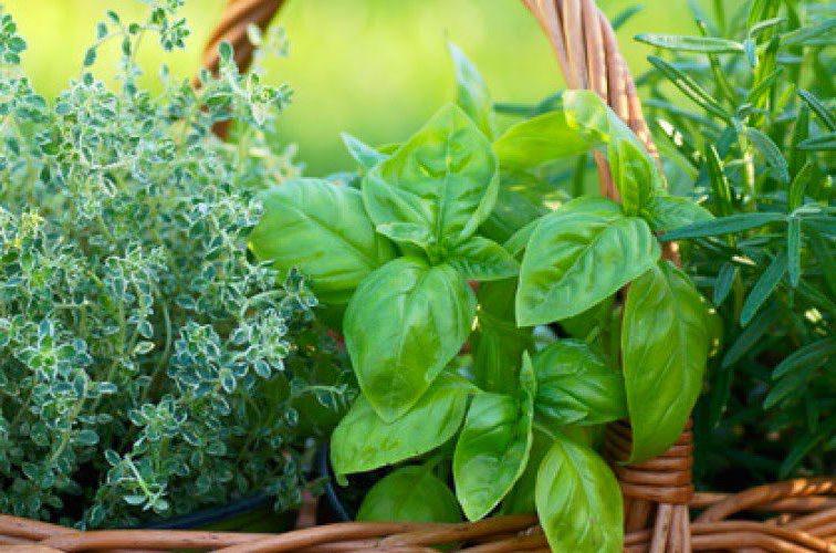 le erbe aromatiche in un cesto