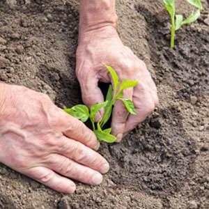 uomo che trapianta una pianta in primavera