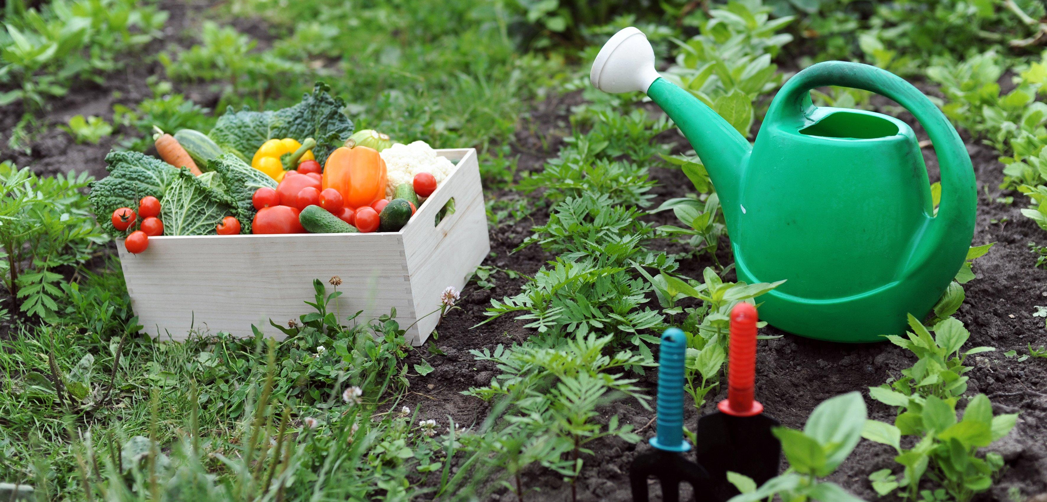 come fare orto - ortaggi in una cassa con annaffiatore