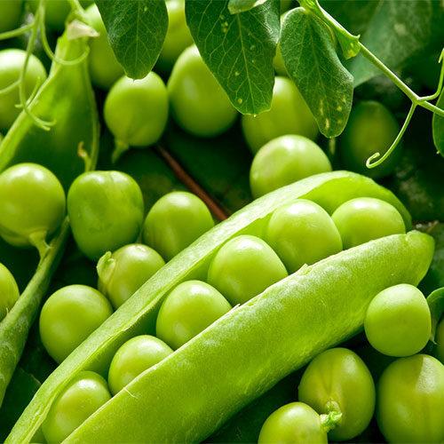 piselli verdi - le guide di come fare orto
