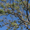 albero-nem-insetticida-biologico