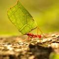 come-eliminare-le-formiche-dal-giadino-e-orto
