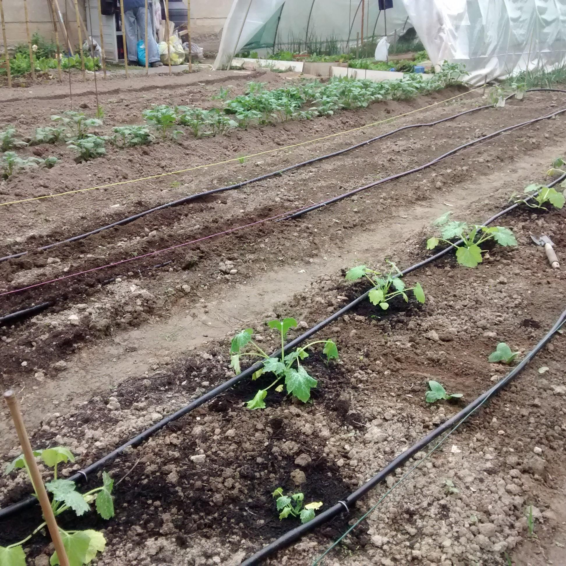 irrigazione a goccia come realizzarlo