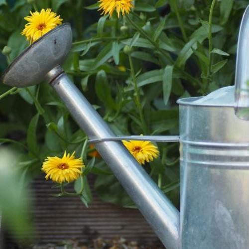 Come evitare gli sprechi di acqua in estate