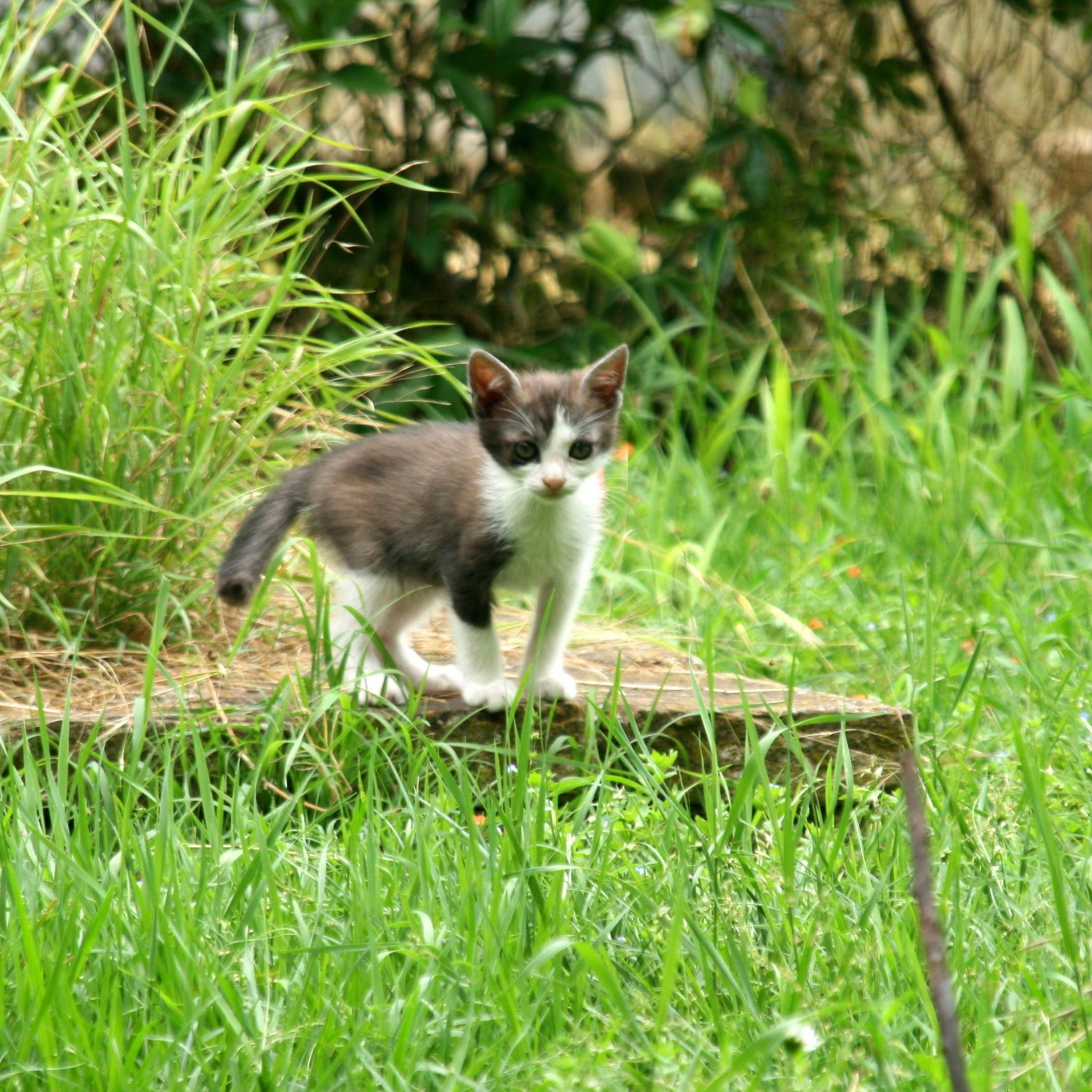 Come coltivare il pomodoro come fare orto fai da te - Allontanare i gatti dal giardino ...