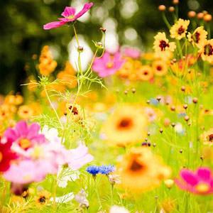 tanti fiori colorati in campo