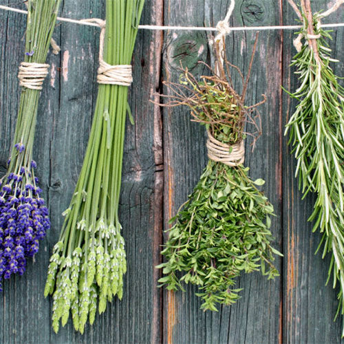 le erbe aromatiche più famose e l' origano