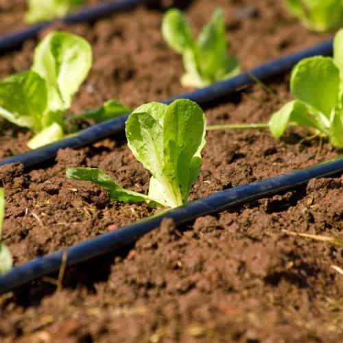 irrigazione a goccia nel particolare