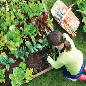 donna con maglione che cura l'orto in inverno