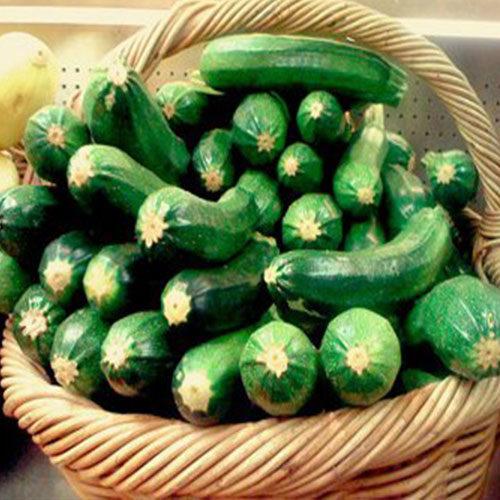 zucchine all'interno di una cesta - le guide di come fare orto
