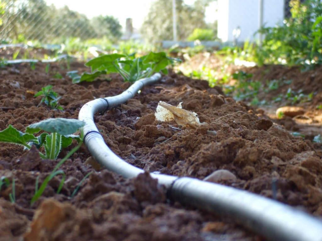 ala-gocciolante-come installare un pianto di irrigazione a goccia
