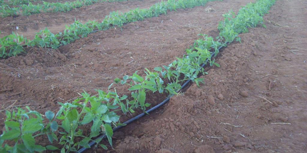 irrigazione a goccia installazione impianto