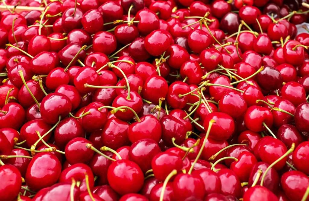 coltivare ciliegie dolci il ciliegio
