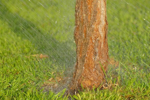 irrigazione prato e giardino in estate