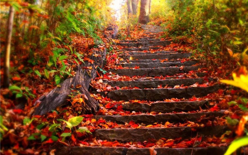 colori autunno foglie di autunno raccolta foglie