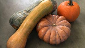 Tipologie di zucche e raccolto