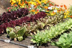 Fotografia di verdure disponibili al raccolto ad Aprile
